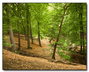 ist2_9437662-forest-scenic